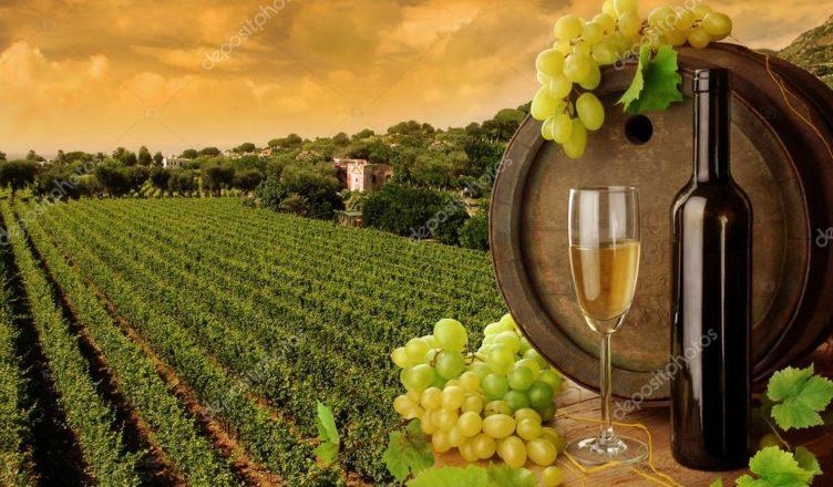 Tour degustazione Vino Fubbiano e Montecarlo