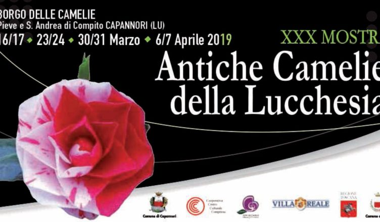 Camellias 2019